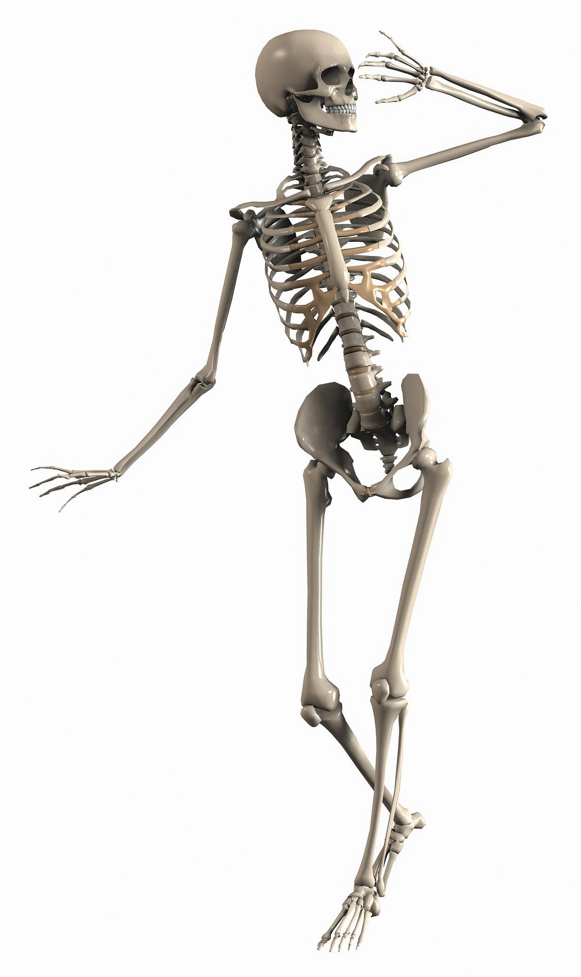 skeleton-2504343_1920 (1)